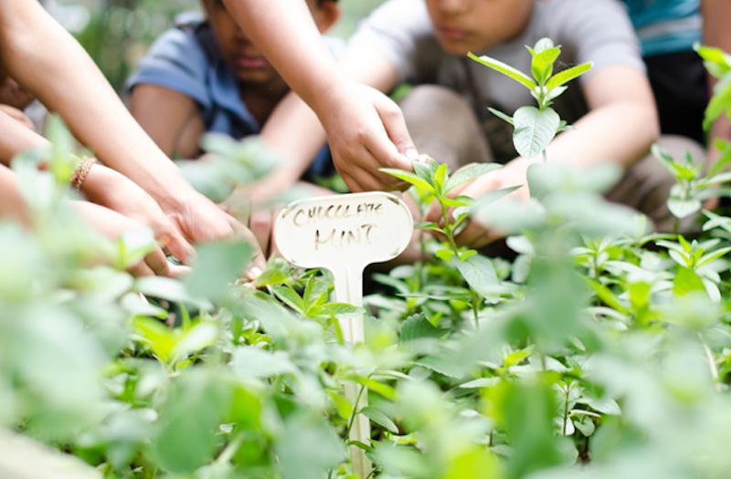 children working in a garden